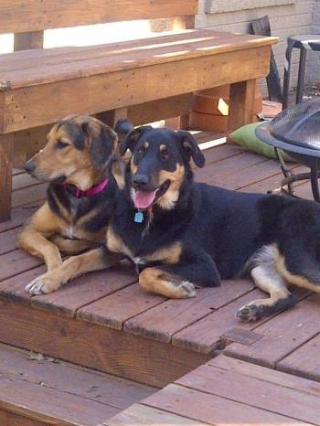 Rosie & Indy
