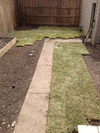 Sod time lapse 1