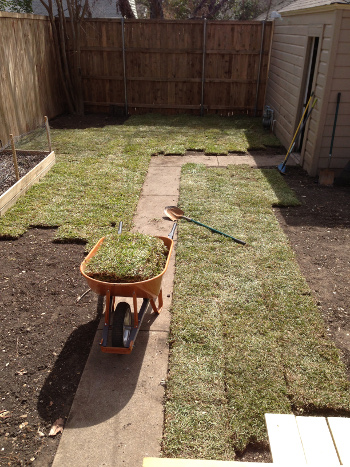Sod time lapse 2