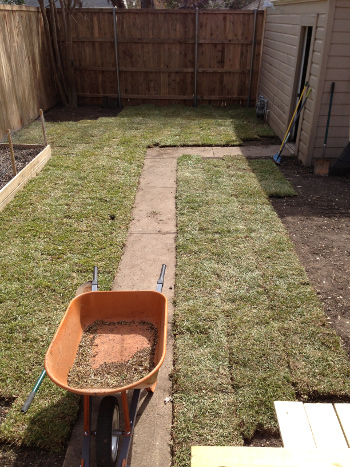 Sod time lapse 3