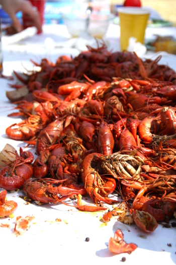 Lots of Crawfish