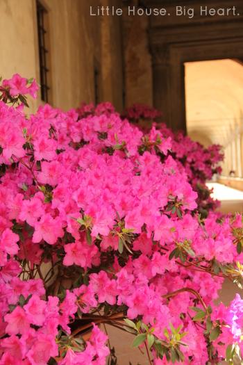 Florence Santa Croce 1